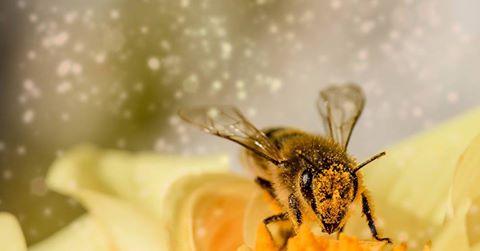 a méhek pénzt keresnek az interneten