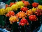 Szomjazóművészek! – kaktuszok és pozsgások kiállítása és vására