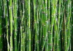 Ki a műanyagos bambusszal a konyhából!
