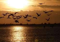 Őszi darules a szegedi Fehér-tónál