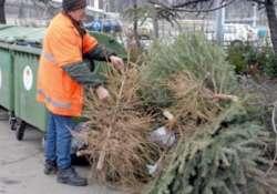 Ne dobd csak úgy el! Elviszik! - karácsonyfák gyűjtése Debrecenben