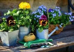 Szépüljünk ingyenes virággal! Na nem mi, hanem a kertünk!