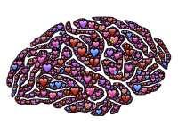 Elkészült a babák agyának növekedési táblázata