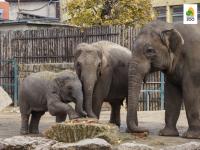 Készíts saját Állatkertet! - 10 részes nyomtatható kreatív kézműveskedés és játék