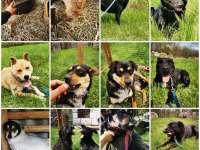 Jótékonysági Adománygyűjtő Vásár menhelyi állatokért