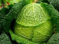Forever: természetes gyerekvitamin káposzta-, brokkoli és spenót porral! (2)