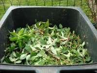 Ajándék komposztáló a debreceni kerttulajdonosoknak