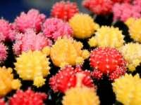 Szomjazóművészek – kaktuszok és pozsgások kiállítása